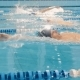 Professional Swimming Competition In The Pool - VideoHive Item for Sale