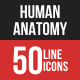 Human Anatomy Filled Line Icons