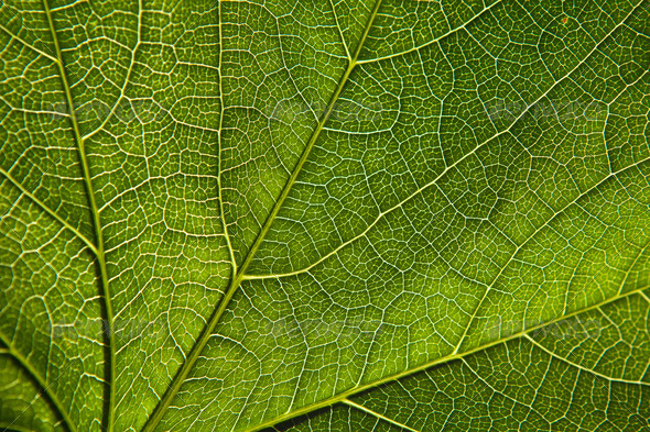Green leaf close-up - Stock Photo - Images