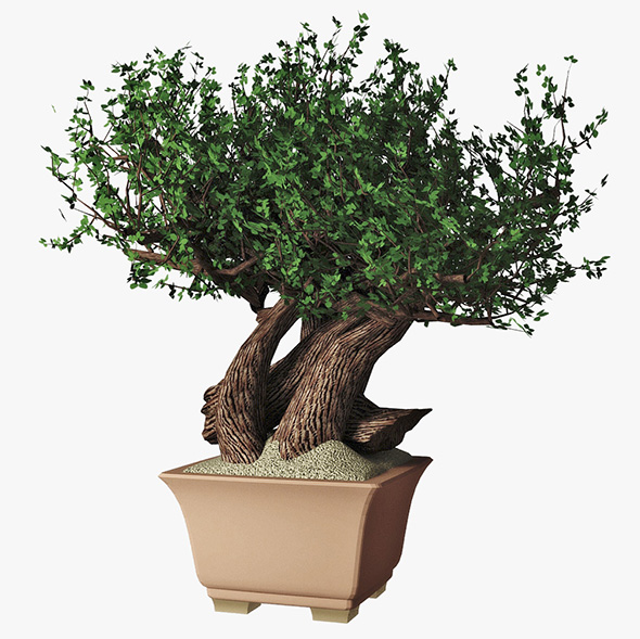 Bonsai - 3DOcean Item for Sale