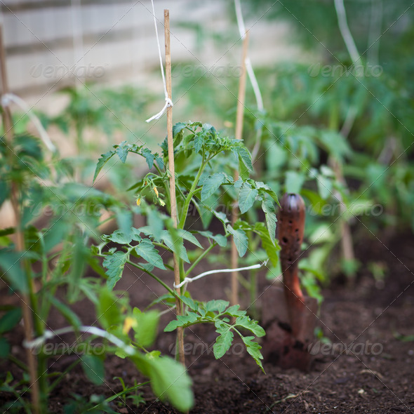 ittle organic/bio/permaculture garden - Stock Photo - Images