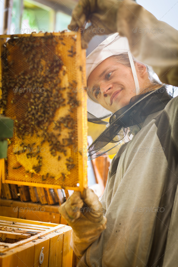 Beekeeper working in an apiary holding a frame of honeycomb cove - Stock Photo - Images
