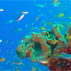 Underwater Glassfish with Blue Water Bacground - VideoHive Item for Sale