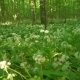 Wild Flower And Grass In The Forest - VideoHive Item for Sale