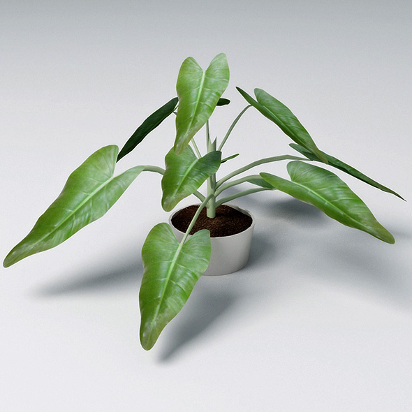 Small Plant  - 3DOcean Item for Sale