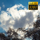Fast Clouds On A Background Of Trees - VideoHive Item for Sale