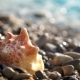 Conch Shell On Pebble Beach - VideoHive Item for Sale
