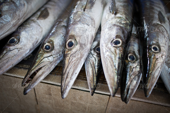 Close up of fish on display in a fish market (Muscat, Oman) - Stock Photo - Images