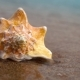 Conch Shell On Sand Beach - VideoHive Item for Sale