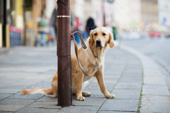 lonely cute dog waiting patiently for his master on a city stree - Stock Photo - Images
