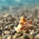Conch Shell On The Pebble Beach - VideoHive Item for Sale