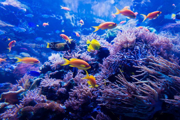 beautiful underwater world - Stock Photo - Images
