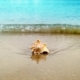 Seashell On Sand Ocean Beach - VideoHive Item for Sale