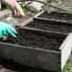 Planting Seeds To Garden Bed - VideoHive Item for Sale