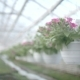 Flower Plants - VideoHive Item for Sale