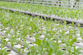 Organic vegetables - PhotoDune Item for Sale