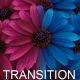 Flowers Transition - VideoHive Item for Sale