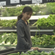 Girl Vegetable Shopping - VideoHive Item for Sale
