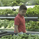 Boy Vegetable Shopping  - VideoHive Item for Sale