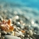 Seashell On The Pebble Beach And Waves - VideoHive Item for Sale
