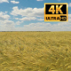 Wheat Field Background - VideoHive Item for Sale