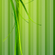 Green grass and green stripes. Background - GraphicRiver Item for Sale