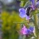 Beetles - VideoHive Item for Sale