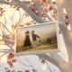 Memory Tree Slideshow - VideoHive Item for Sale