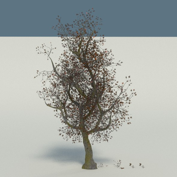 Large Tree in Autumn - 3DOcean Item for Sale
