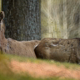 Two Fallow Deer (Doe) In The Forest - VideoHive Item for Sale