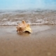 Seashell On The Sand Beach And Waves In Sunrise - VideoHive Item for Sale