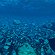 Background in the Form of the Underwater World - VideoHive Item for Sale