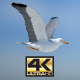 Seagull Super Pack - Morning Light - VideoHive Item for Sale