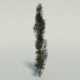 Poplar Tree - 3DOcean Item for Sale
