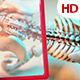 Human Skeleton 01755 - VideoHive Item for Sale