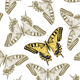 Seamless Butterfly Texture - GraphicRiver Item for Sale