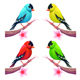 Group of Birds in Different Color Tones - GraphicRiver Item for Sale