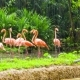 Pink Flamingo In Zoo - VideoHive Item for Sale