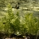 Fern Growing On a Bog In The Wild Forest. - VideoHive Item for Sale