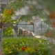 Farmer Spraying Water On Plants In Greenhouse - VideoHive Item for Sale