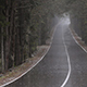 Road in the Forest in Heavy Rain - VideoHive Item for Sale
