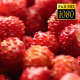 Rotation Wild Strawberry 2 - VideoHive Item for Sale