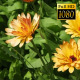 Summer Wildflowers - VideoHive Item for Sale