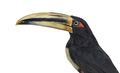 Pale Mandibled Aracari isolated on white - PhotoDune Item for Sale