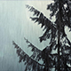 Tree Swaying In Wind And Rain - VideoHive Item for Sale