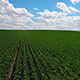 Crop Time - VideoHive Item for Sale