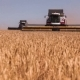Combine Harvester. Wheat Harvest. - VideoHive Item for Sale