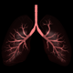 3D Lungs Breathing - VideoHive Item for Sale