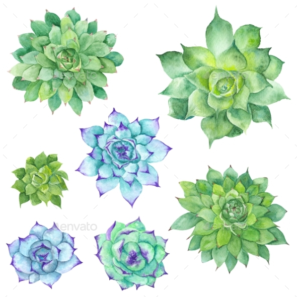 Watercolor Succulents Set - Objects Illustrations