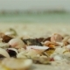 Sea shells on the sea shore in Sunny day, shot on a macro lens canon 5dm2 - VideoHive Item for Sale
